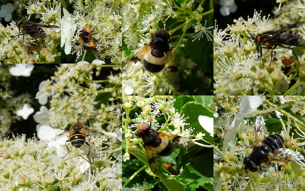 Midsummer Feast for Insects by HELUA