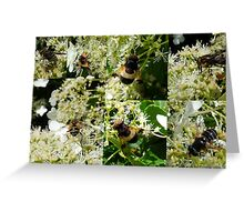 Midsummer Feast for Insects Greeting Card