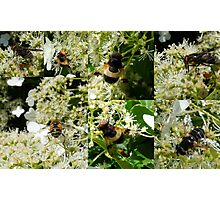 Midsummer Feast for Insects Photographic Print