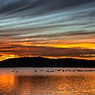 Swanning Around at Sunset by bazcelt