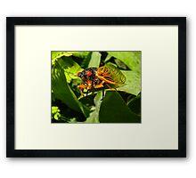 Rebirth of the Cicada Framed Print