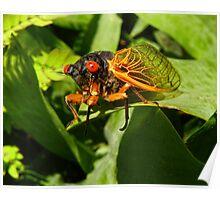 Rebirth of the Cicada Poster