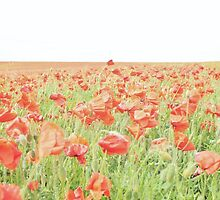 Poppy Field #6 by Matthew Floyd