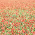 Poppy Field #7 by Matthew Floyd