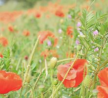 Poppy Field #13 by Matthew Floyd