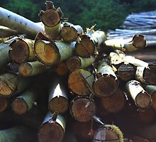 Logs by Sophie Lasson
