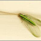 Green lacewing by Helenvandy