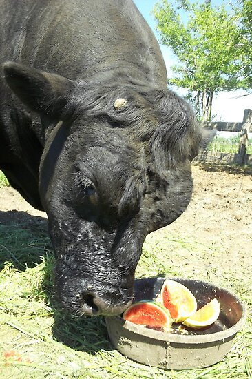 Happy Watermelon Day! by JobieMom