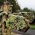 Lichen Post by Country  Pursuits