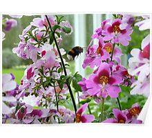 Balmoral Bee Poster
