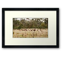 Troop of Kangaroos Framed Print