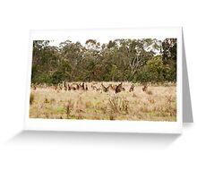 Troop of Kangaroos Greeting Card