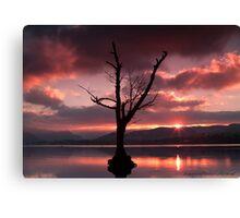 Ullswater tree Canvas Print