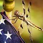 Patriotic Dragonfly by KBritt