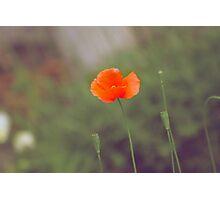 the vintage flower Photographic Print