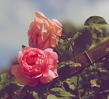 Vintage Rose by ejrphotography