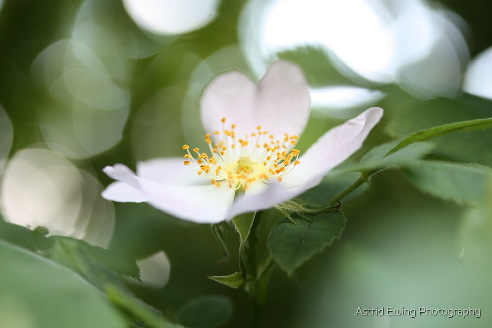 Softly does it... by Astrid Ewing Photography