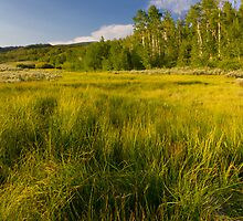Spring fed Grass in a meadow by Alan Mitchell