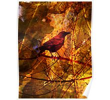 Little Red Robin Poster