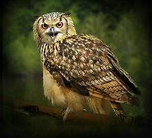 Eagle Owl by peaky40