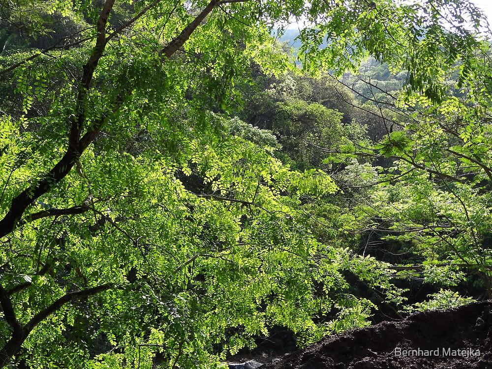 greens are the colors of the rainy season - verdes son los colores de temporada de las lluvias by Bernhard Matejka
