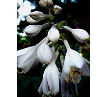 White Purple Bells Photographic Print