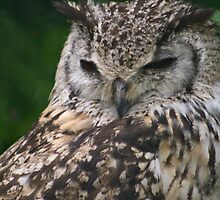 Bengal Eagle Owl by GreyFeatherPhot