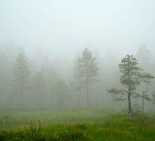 Misty day by julie08