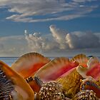 Shells by George Davidson