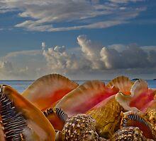 Shells by Georden