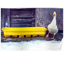 Duck With Cold Feet. Poster