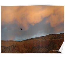 Turkey Vulture Circles Ghost Ranch at Sundown Poster