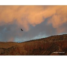 Turkey Vulture Circles Ghost Ranch at Sundown Photographic Print