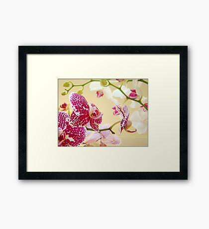 Orchid Flowers art prints Orchids Floral Botanical Framed Print
