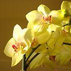 Classy Elegant Orchid art prints Orchids by BasleeArtPrints