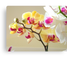 Orchids Foral Art Prints Orchid Flowers Canvas Print