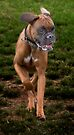 Dogs with game face on .19 by Alex Preiss