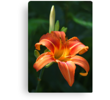 Daylily From My Garden Canvas Print