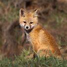 FOXY by Jeanne Frasse