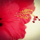 Summer Love by ZoeMcduncan