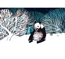 Panda bear in the snow Photographic Print