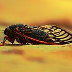 Cicada 4 by ekingrn