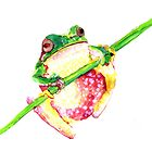 Frog by Susan Craig