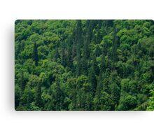 Nature Pattern on Palms Canvas Print