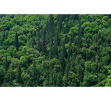 Nature Pattern on Palms Photographic Print