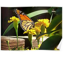 Monarch with Marigolds Poster
