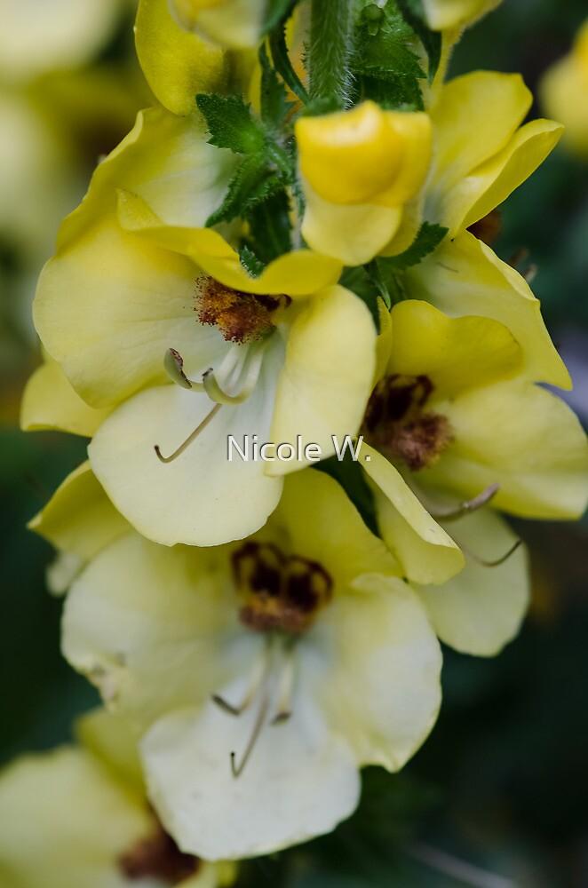 Yellow by Nicole W.