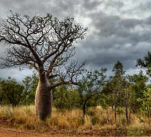Another Boab Beauty by Dianne English