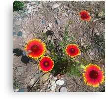 CO Wildflowers Canvas Print