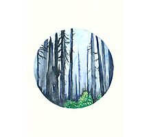 Forest No.3 Photographic Print